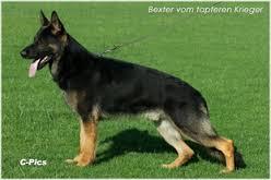 bexter